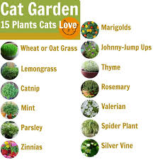Inspiring Non Toxic Cat Plants Pictures - Best idea home design .