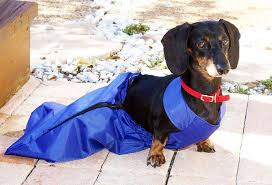 drag bags for paralysed dogs