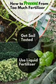 How To Prevent From Too Much Fertilizer Too Much