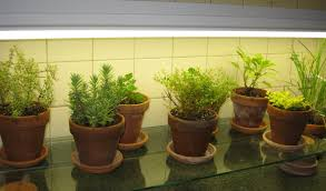 Kitchen Herb Garden Indoor Kitchen Counter Herb Garden