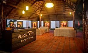 acacia tree garden acacia tree garden