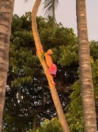 Hale Koa Luau Honolulu 2019 All You Need To Know Before