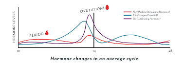 Chart Of Menstrual Cycle Hormones Ovulation 101 What Is It How Does It Work Clued In