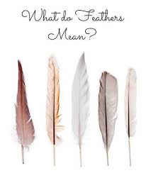 Dream Catcher Feather Meanings Cool What Does A Feather Symbolize Feather Symbolism Feather Signs