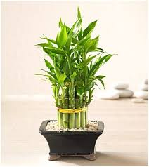office feng shui plants. Using Plants To Help Feng Shui And Purify The Air In Your Office | GoPromotional Blog N