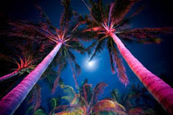 tropical outdoor lighting. let tropical outdoor lighting set the mood e