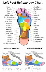 41 Prototypal Foot Reflexology Chart Stomach