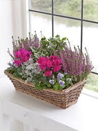 Autumn Window Box Interflora Container Gardening Pinterest