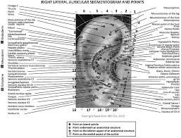 A New Nomenclature For Auricular Acupuncture The Ultimate In