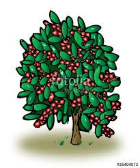 coffee plant illustration vector.  Coffee Coffee Plant In Coffee Plant Illustration Vector R