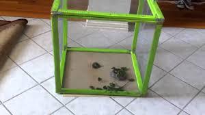 homemade baby iguana cage