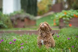 Weitere ideen zu hunde rassen, hunde, rassen. Susse Hunde Die Du Unbedingt Kennen Solltest Dogbible