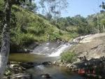 imagem de Palmeirina+Pernambuco n-13