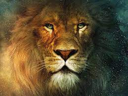Cool Lion Face Wallpapers - Top Free ...