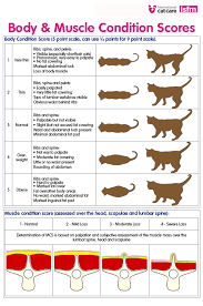 Overweight Cat Chart Help My Cat Is Overweight Our Best Tips To Help Your Fat
