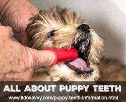 Puppy Teething Age Chart Puppy Teeth Information An Owners Guide