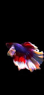 Download - Fish