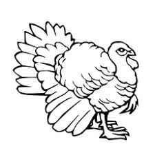 Small Picture Top 25 Turkey Coloring Pages For Toddlers