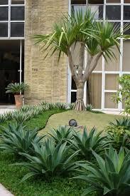 Pndanus com Agaves para o jardim de entrada de um Edifcio comercial.