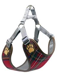 Pretty Paw Canada Designer Trends For Your Four Legged Friends