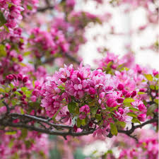 the best flowering trees to plant in