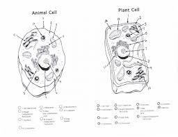 Plant Cells Vs Animal Cells Venn Diagram Plant Cell Diagram Free Download Plant Cell Diagram Worksheet