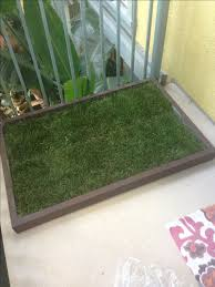 dogs bathroom grass. doggy and the city dog potty grass box filled with fresh natural grass! dogs bathroom t