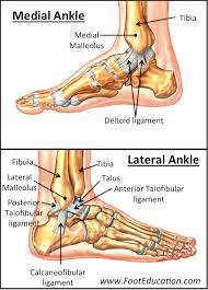 Ankle Fractures Tibia And Fibula Orthopaedia
