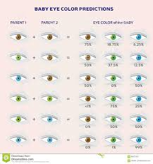 Blue In Green Chart Baby Eye Color Prediction Chart Icons In Blue Green And