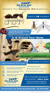 Big Blue Bug Solutions Big Blue Bug Answers Your Most Commonly Asked Carpenter Ant