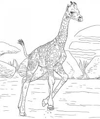 Small Picture Get This Giraffe Coloring Pages Hard Printables for Older Kids 46178