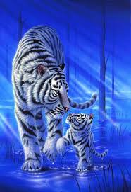 baby white tigers in water. Wonderful Tigers Steps On The Water  White Tiger By Kentaro Nishino More Intended Baby Tigers In B