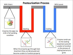 Milk Making Process Milk Pasteurization Process Flow Chart