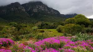 141013104617 south african flowers 5 horizontal large gallery jpg