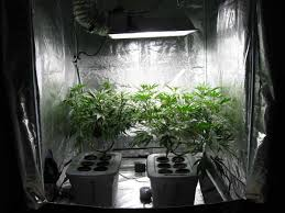 7 more nutrients does not equal more buds