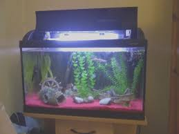 7 easy diy ideas for betta fish tanks with divider tfcg