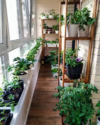 balcony container vegetable gardening