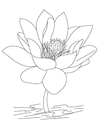Small Picture Coloring Pages Of Lotus Flowers Coloring Pages