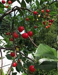 Grow Fruit Trees In Michigan  GardenMichiganWhat Fruit Trees Grow In Michigan