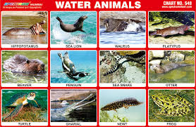 Animals Pictures That Live In Water A Selection Of Pins
