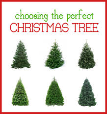 Types Of Christmas Trees  HolidappyTypes Of Fir Christmas Trees