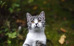Cute Kitten Wallpaper Free Download ...