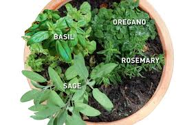 pot with italian herbs oregano rosemary sage basil handyman
