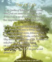 Tree Of Life Quote Gorgeous Tree Of Life Quote Magnificent Best 48 Tree Of Life Quotes Ideas On