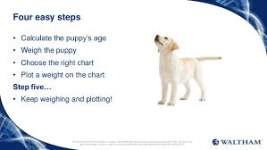 51 Right Dog Growth Chart Puppy