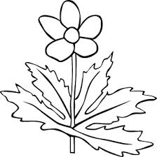 270 best Coloring pages   Trees images on Pinterest   Fall  Autumn further House Plant Icon  Outline Vector   Photo   Bigstock additionally House Plant Clipart Black And White   Clipart library   Free additionally  additionally  further  as well Cartoon Unhappy House Plant Stock Vector 116354443   Shutterstock besides  furthermore  furthermore  additionally . on house plant clipart outline