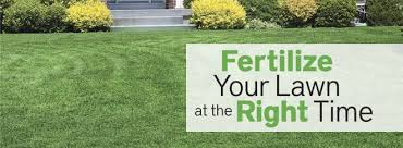 Are you thinking of getting fertiliser for your lawn? However, you're not  sure what type to obtain. To achieve a beautiful garden, it takes more than  just ...