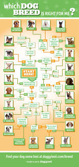 Dog Breed Compatibility Chart Which Dog Breed Is Right For Me Doowaggle
