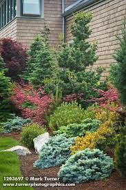 Small Picture 689 best Landscape Shrubs Trees images on Pinterest Garden