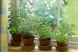 Kitchen Window Herb Garden How To Grow Herbs Indoors On A Sunny Windowsill